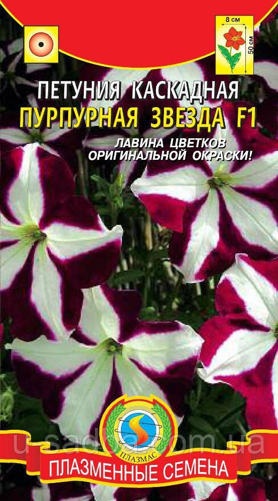 Семена цветов  Петуния каскадная Пурпурная звезда 10 драже в пробирке пурпурные (Плазменные семена)