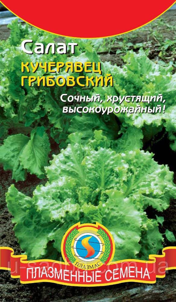 Семена салата Салат Кучерявец Грибовский 1 г  (Плазменные семена)