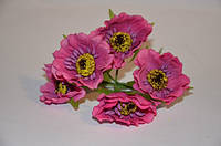 Цветок Мак темно-розовый