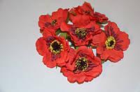 Цветок Мак красный