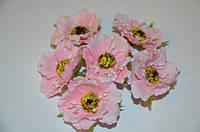 Цветок Мак светло-розовый