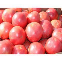 Насіння томату Тарпан F1 (1000 сем.)