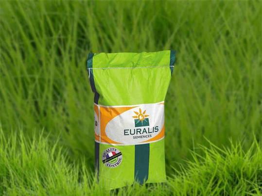Насіння озимого ріпака ЕС Алонсо, Евраліс Франція / Семена озимого Рапаса ЕС Алонсо, Ранний, фото 2