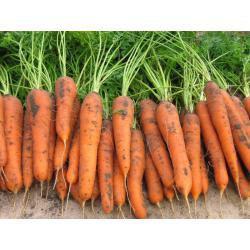 Семена моркови Лагуна F1 (25 000 сем.) Nunhems