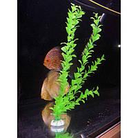 Искусственное пластиковое растение Салатовое.