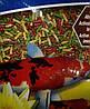 Корм для кои и золотых рыбок плавающий 4в1 (6л/1кг)