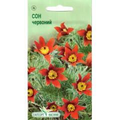 Семена Сон-трава красная