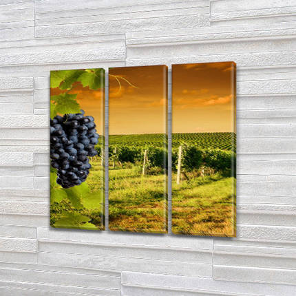 Модульная картина Виноградное поле, на Холсте син., 65x65 см, (65x20-3), фото 2