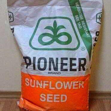 Семена подсолнечника, Pioneer, P64LC108, под евролайтинг, фото 2