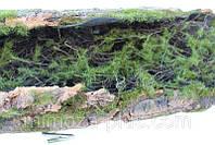 Декоративный мох на коряге, фото 1