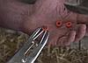 Кольца для кастрации (100 шт.), фото 2