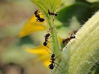 Средства промышленного производства для борьбы с муравьями