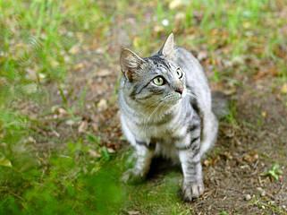 Відлякувачі собак і котів