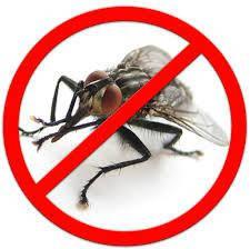 Засоби для боротьби з мухами