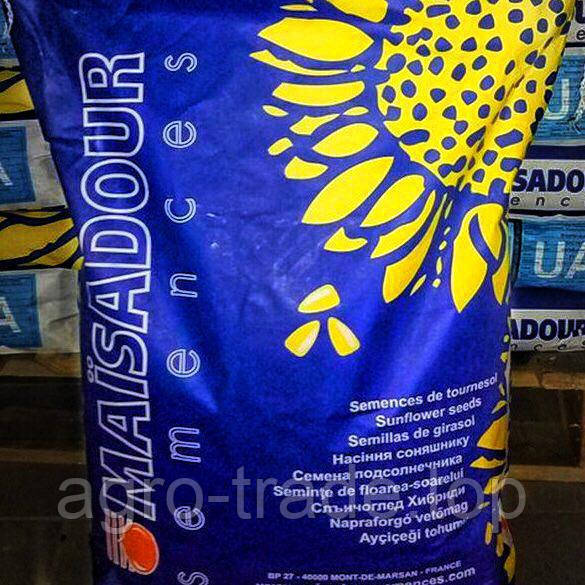Семена подсолнечника, Maisadour, MAS 83 P