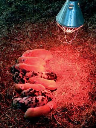 Инфракрасная лампа ИКЗК 250 Вт R127 Е27 Калашниково