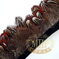 Тесьма перьевая из пера фазана, цвет Cooper,  0,5м, высота 5,5 см
