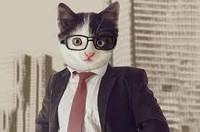 Котячі паразити можуть зробити з людини бізнесмена, - дослідження