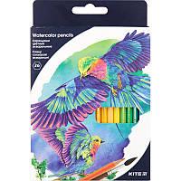 """Олівці кольорові акварельні, 36 шт. Kite """"Птахи"""", фото 1"""