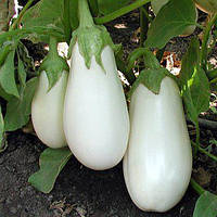 Семена баклажана Бибо F1 (1000 сем.)