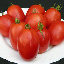 Семена томата Велоз F1 (1000 сем.)