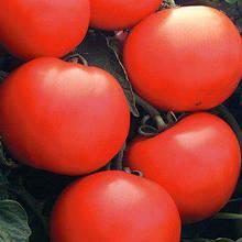 Насіння томату Дебют F1 (1000 сем.)