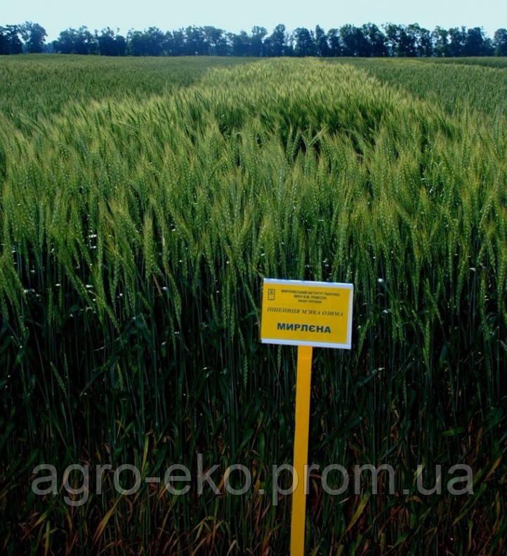 """Пшеница озимая """"Мирлена"""" - элита Украина"""