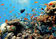 Фотообои 3D природа, море (флизелин, плотная бумага, 254x184 см) Подводный мир во всей красе (4-005)