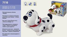 Интерактивная собачка Лакки 7110 реагирует на прикосновения,бегает, лает, ворчит