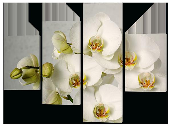 Модульная картина Белые орхидеи Код: 561.4к.120