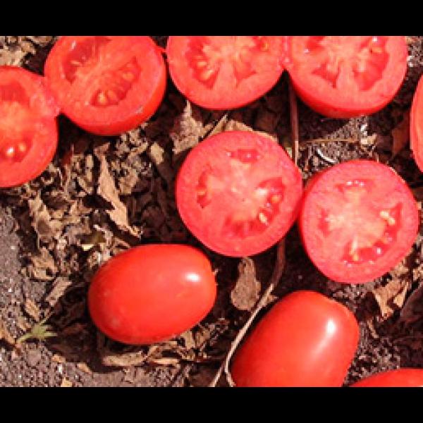Апгрейд F1 - семена томата, Esasem