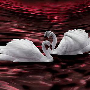 Постельное белье Лебединое озеро 3Д перкаль ТМ Царский дом  (Полуторный), фото 2