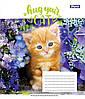 А5/12 кл. 1В Hug Your Cat, тетрадь ученич.