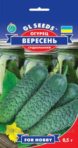 Огурец Вересень сорт высокоурожайный среднеранний хрустящий без горечи, упаковка 0,5 г
