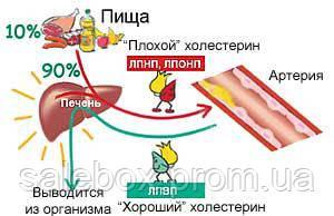 Все про холестерин: норма в крови, советы и рекомендации, как снизить.