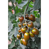 Криспина плюм F1 - семена томата, Esasem