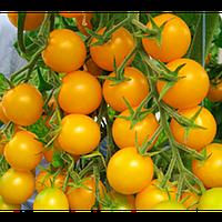 Стар голд F1 - семена томата, Esasem