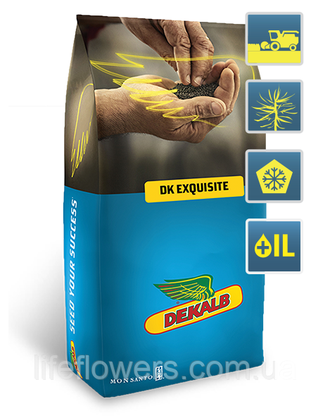 DK Exqusite (ДК Ексквізіт)