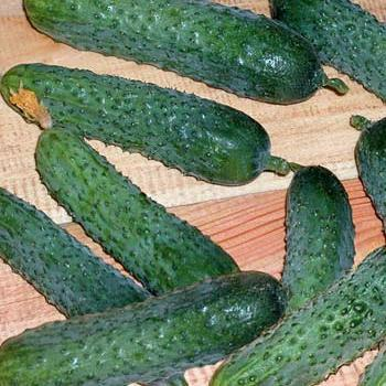 Семена огурца Меренга F1 (250 сем.)