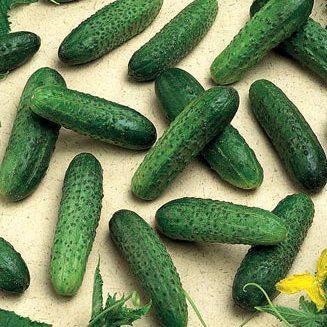 Семена огурца Мирабелл F1 (250 сем.)
