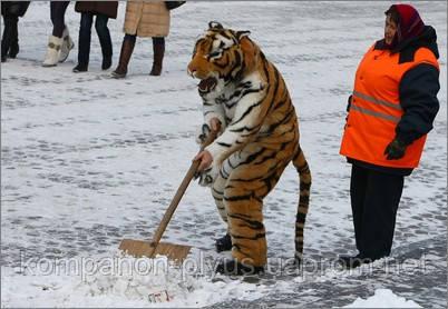 Уборка снега вручную Киев 044 531 88 75