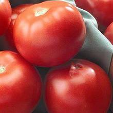Семена томата Флорида 47 F1 (1000 сем.)