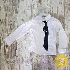 Оптом Блузка для девочек 6-9 лет