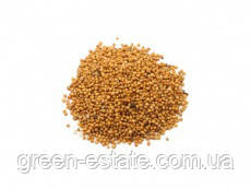 Семена горчицы желтой