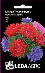 Семена астры Тысяча Чудес, 0,2 гр., карликовая, смесь