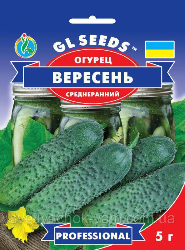 Огурец Вересень сорт высокоурожайный среднеранний хрустящий без горечи, упаковка 5 г