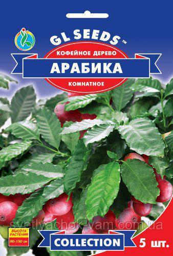 Кофейное дерево Арабика вечнозеленое комнатное растение, упаковка 5 шт
