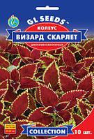 Колеус Визард Скарлетт с яркими бронзово-красными листьями, упаковка 10 шт