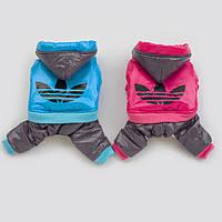 Брендовый комбинезон для собак Adidas. Одежда для собак.