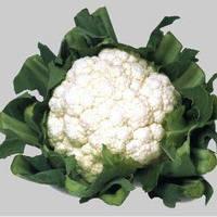 Семена цветной капусты Уайт Эксел F1 (1000 сем.) Sakata